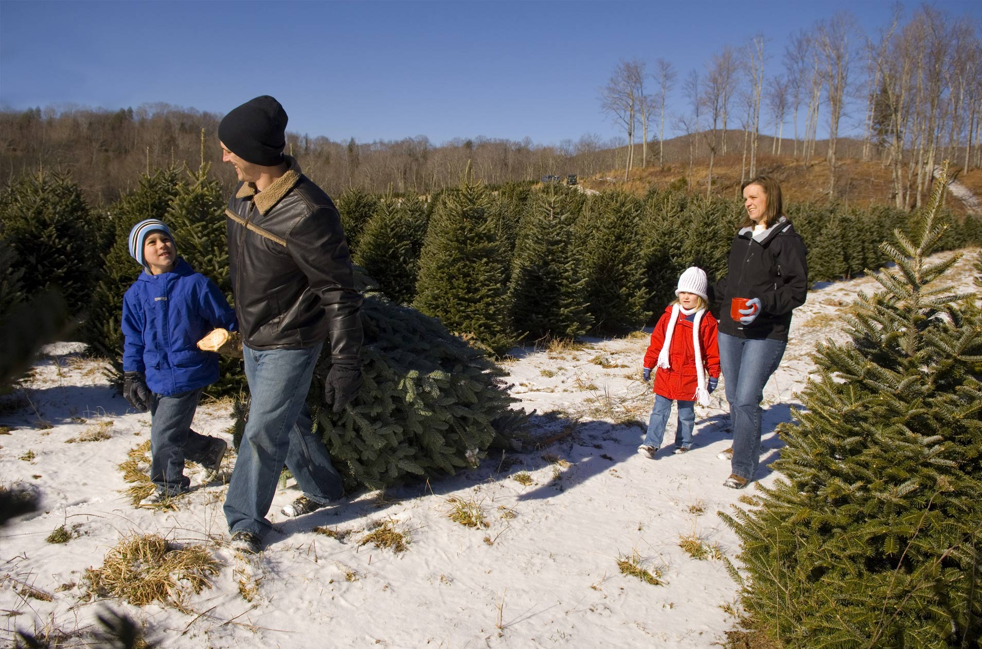 Tennessee Christmas Tree Growers – Christmas Tree Farms in Tennessee