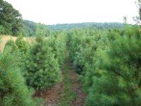 save - Bluebird Christmas Tree Farm