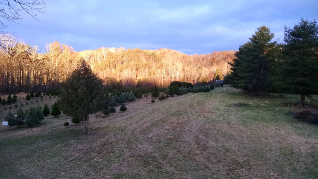 East Tennessee | Tennessee Christmas Tree Growers