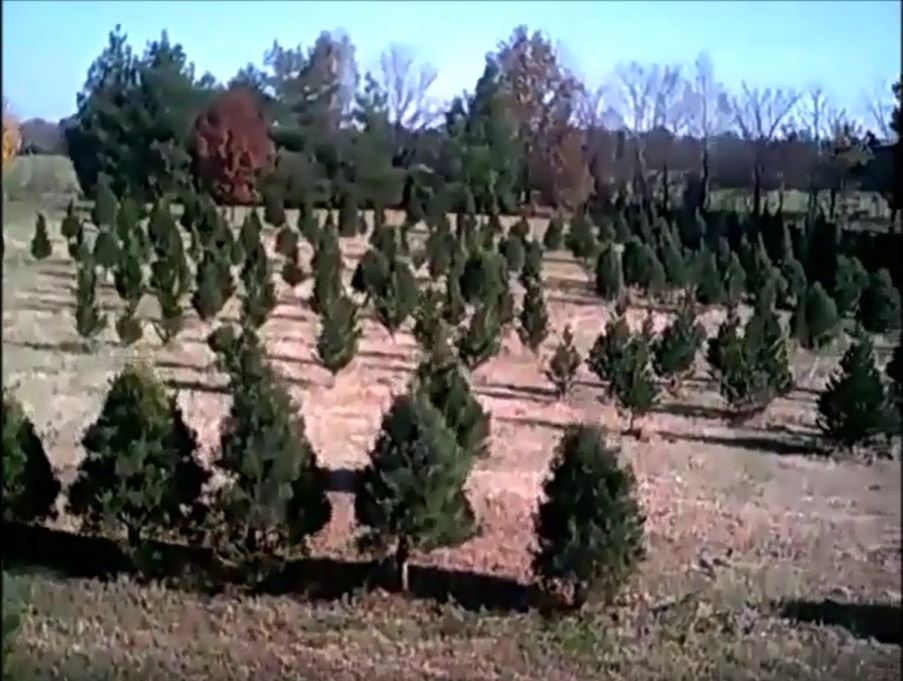 Tennessee Christmas Tree Growers